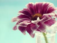 Позитивна психотерапия – истини и заблуди
